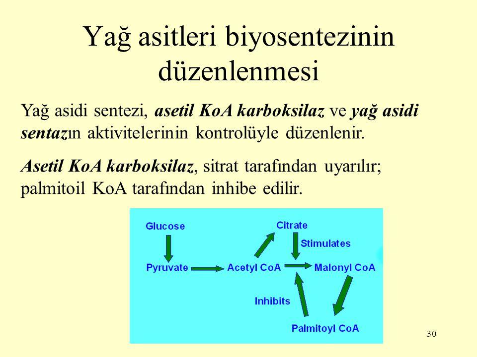 30 Yağ asitleri biyosentezinin düzenlenmesi Yağ asidi sentezi, asetil KoA karboksilaz ve yağ asidi sentazın aktivitelerinin kontrolüyle düzenlenir. As