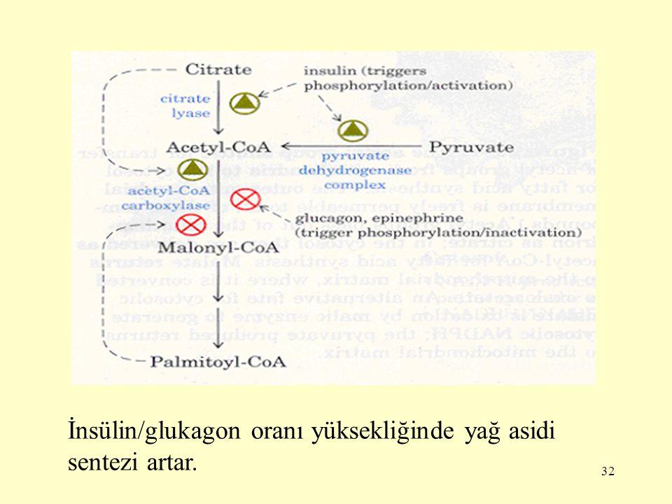 32 İnsülin/glukagon oranı yüksekliğinde yağ asidi sentezi artar.
