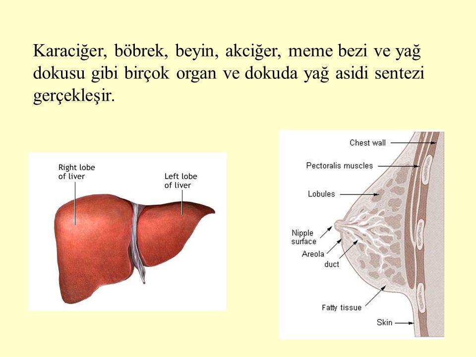 4 Karaciğer, böbrek, beyin, akciğer, meme bezi ve yağ dokusu gibi birçok organ ve dokuda yağ asidi sentezi gerçekleşir.
