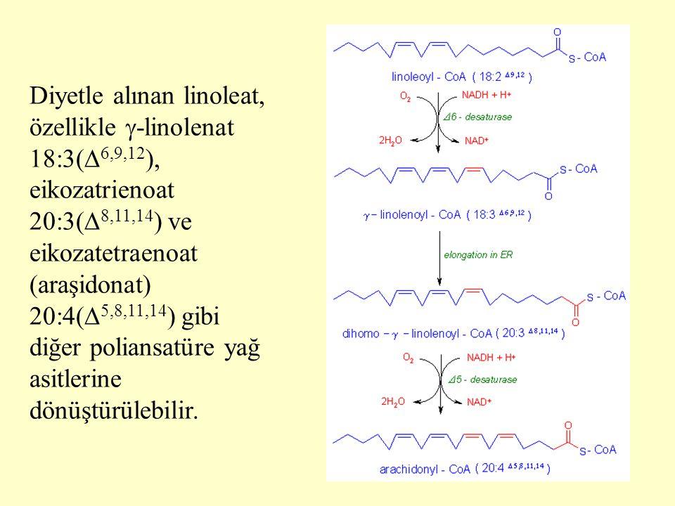40 Diyetle alınan linoleat, özellikle  -linolenat 18:3(  6,9,12 ), eikozatrienoat 20:3(  8,11,14 ) ve eikozatetraenoat (araşidonat) 20:4(  5,8,11,