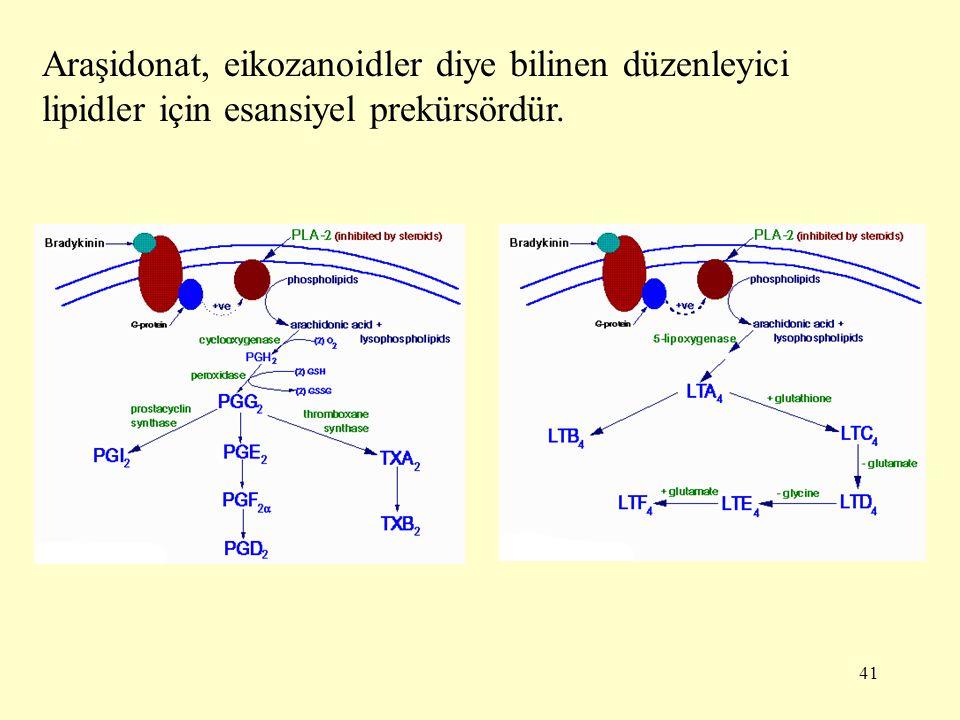 41 Araşidonat, eikozanoidler diye bilinen düzenleyici lipidler için esansiyel prekürsördür.