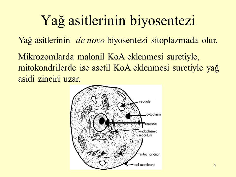 5 Yağ asitlerinin biyosentezi Yağ asitlerinin de novo biyosentezi sitoplazmada olur. Mikrozomlarda malonil KoA eklenmesi suretiyle, mitokondrilerde is