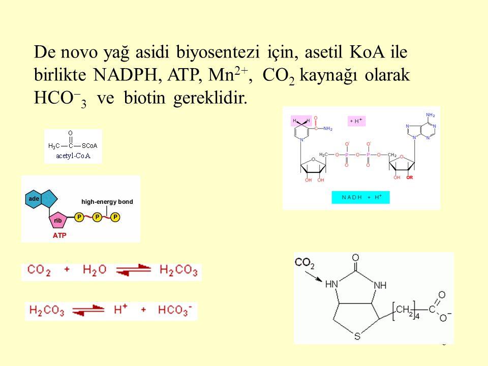 37 Mitokondrilerde yağ asidi zincirlerinin uzaması, bir uzun zincirli açil KoA ile asetil KoA'nın tiyolaz tarafından katalize edilen bir reaksiyon sonucu kondensasyonunu kapsar.