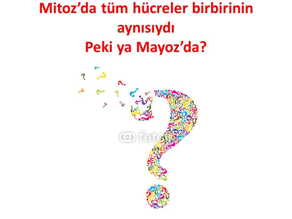 Mitoz'da tüm hücreler birbirinin aynısıydı Peki ya Mayoz'da?
