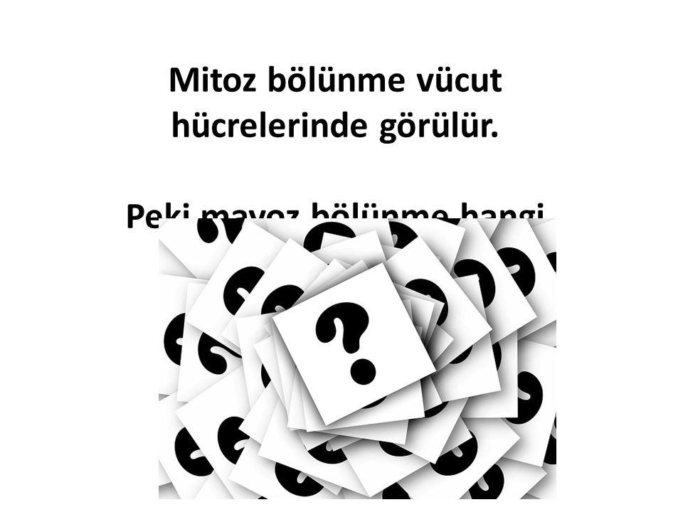NOT : Mayoz 1 de HOMOLOG KROMOZLAR Mayoz 2 de KARDEŞ KROMATİDLER ayrılır..