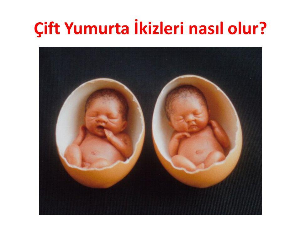 Çift Yumurta İkizleri nasıl olur?