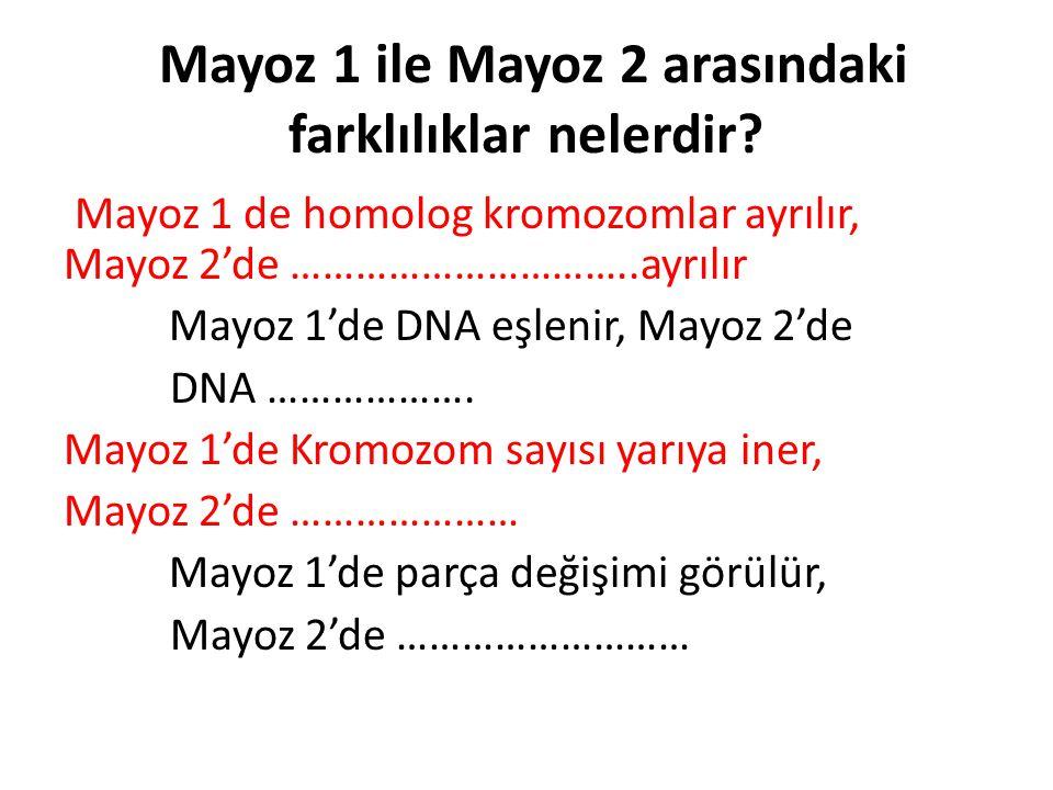 Mayoz 1 ile Mayoz 2 arasındaki farklılıklar nelerdir? Mayoz 1 de homolog kromozomlar ayrılır, Mayoz 2'de …………………………..ayrılır Mayoz 1'de DNA eşlenir, M