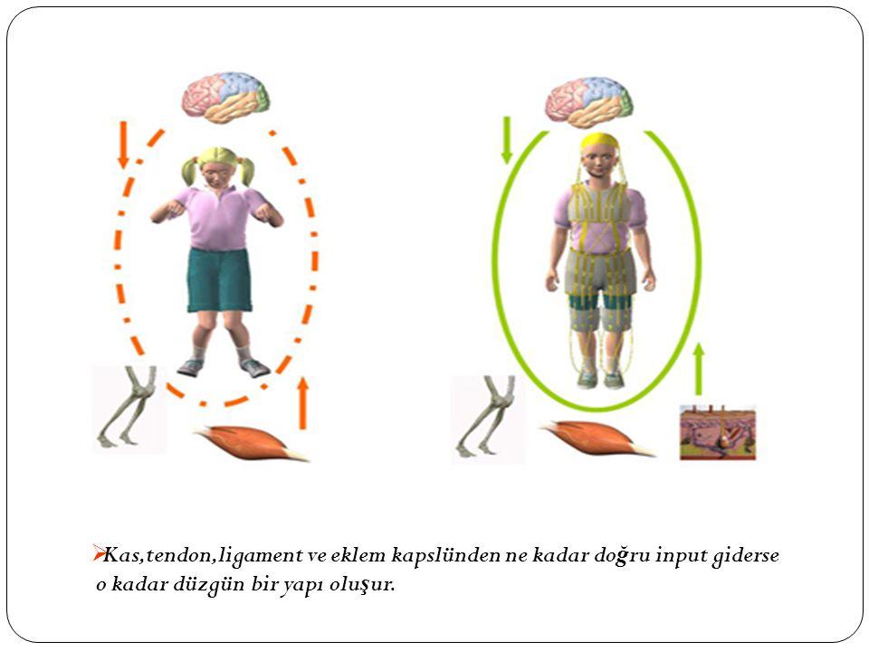  Kas,tendon,ligament ve eklem kapslünden ne kadar do ğ ru input giderse o kadar düzgün bir yapı olu ş ur.
