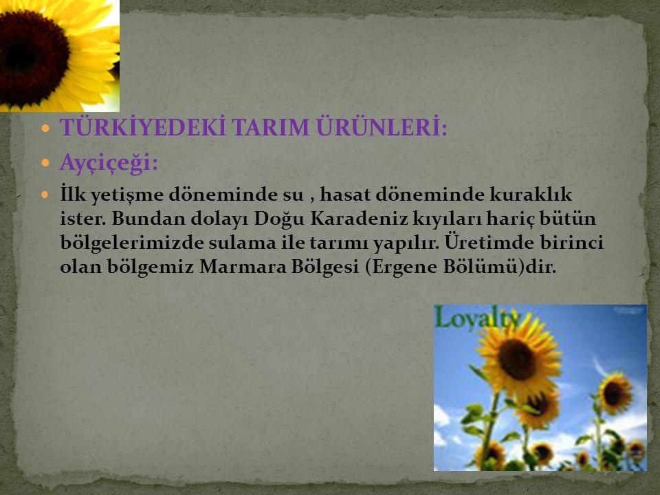 TÜRKİYEDEKİ TARIM ÜRÜNLERİ: Ayçiçeği: İlk yetişme döneminde su, hasat döneminde kuraklık ister. Bundan dolayı Doğu Karadeniz kıyıları hariç bütün bölg