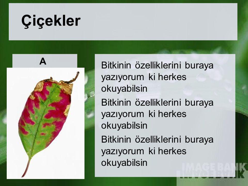 A Bitkinin özelliklerini buraya yazıyorum ki herkes okuyabilsin
