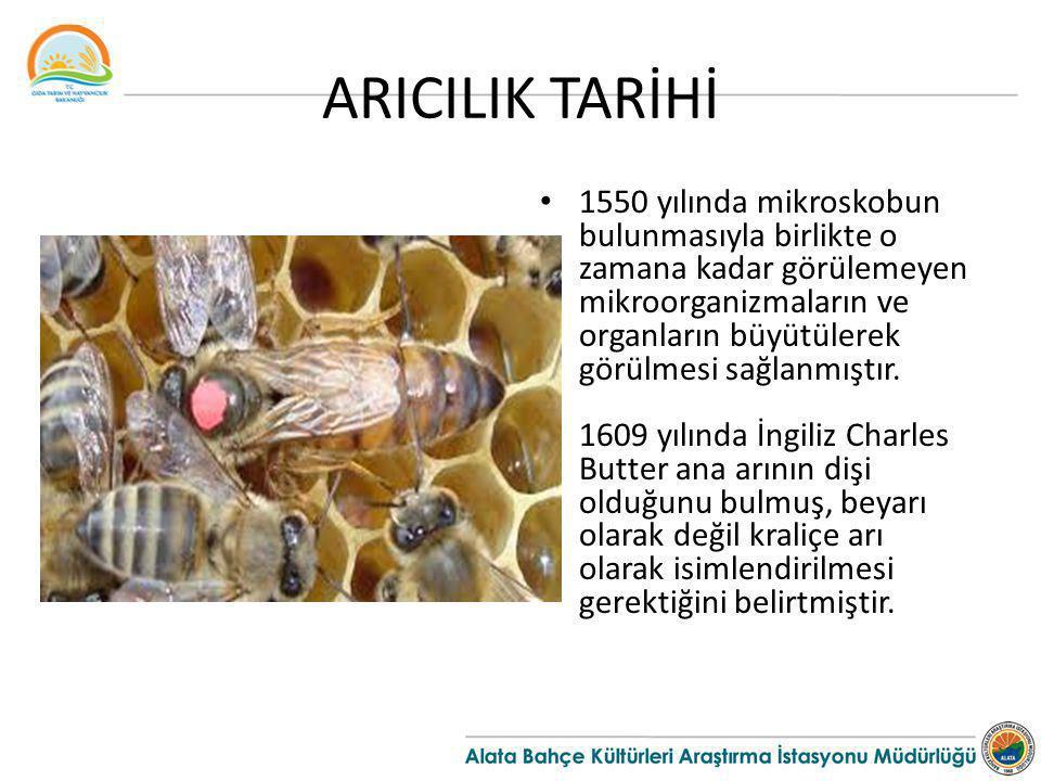 ARICILIK TARİHİ 1550 yılında mikroskobun bulunmasıyla birlikte o zamana kadar görülemeyen mikroorganizmaların ve organların büyütülerek görülmesi sağl