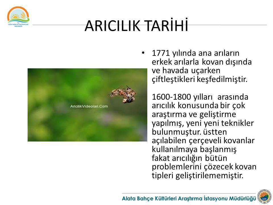 ARICILIK TARİHİ 1771 yılında ana arıların erkek arılarla kovan dışında ve havada uçarken çiftleştikleri keşfedilmiştir. 1600-1800 yılları arasında arı