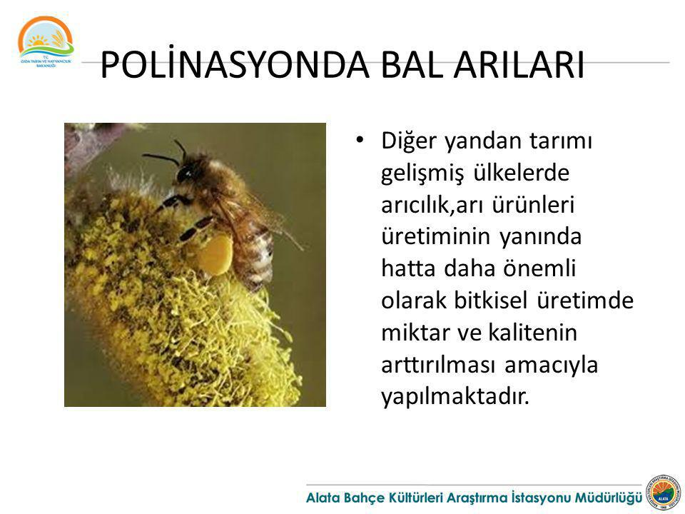 POLİNASYONDA BAL ARILARI Diğer yandan tarımı gelişmiş ülkelerde arıcılık,arı ürünleri üretiminin yanında hatta daha önemli olarak bitkisel üretimde mi