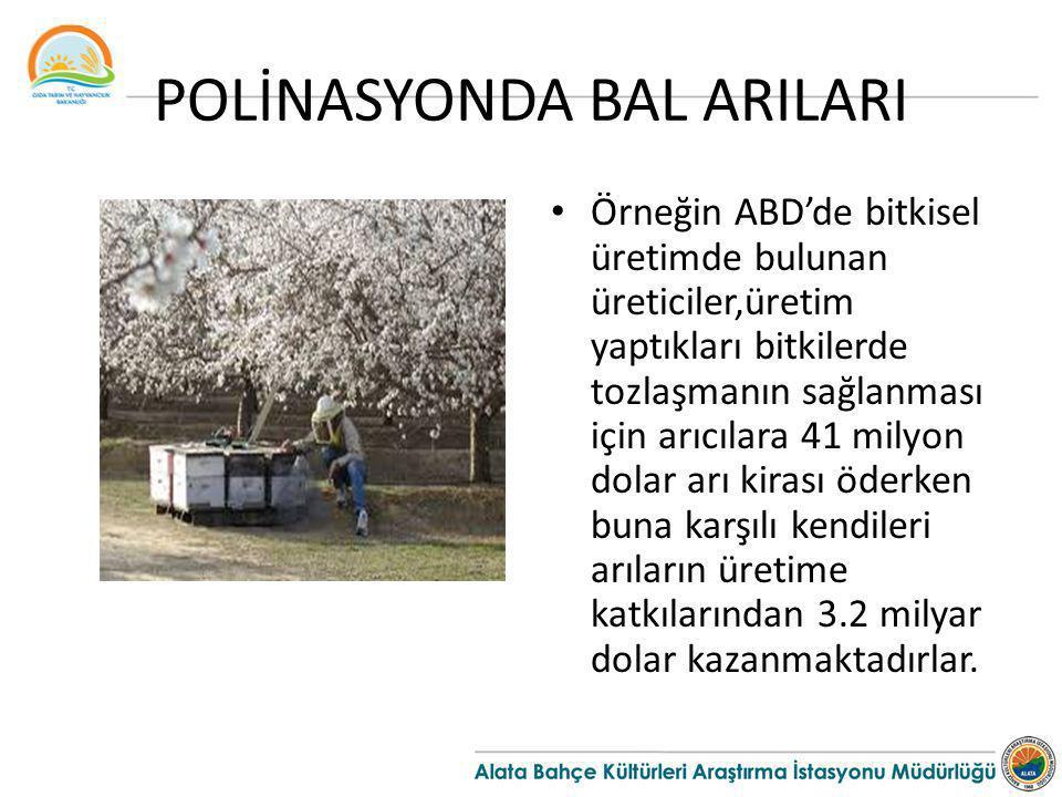 POLİNASYONDA BAL ARILARI Örneğin ABD'de bitkisel üretimde bulunan üreticiler,üretim yaptıkları bitkilerde tozlaşmanın sağlanması için arıcılara 41 mil