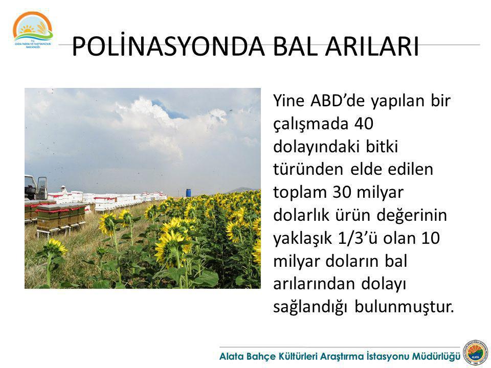 POLİNASYONDA BAL ARILARI Yine ABD'de yapılan bir çalışmada 40 dolayındaki bitki türünden elde edilen toplam 30 milyar dolarlık ürün değerinin yaklaşık