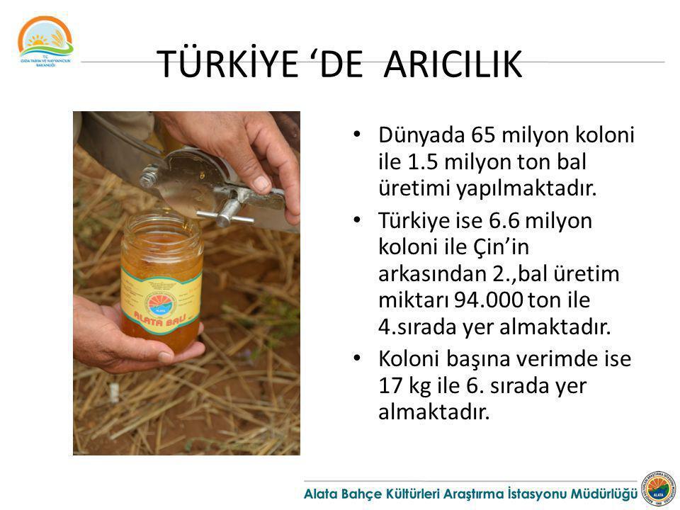 TÜRKİYE 'DE ARICILIK Dünyada 65 milyon koloni ile 1.5 milyon ton bal üretimi yapılmaktadır. Türkiye ise 6.6 milyon koloni ile Çin'in arkasından 2.,bal