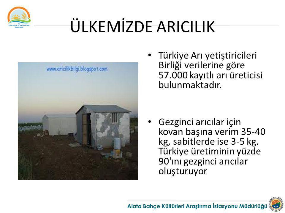 ÜLKEMİZDE ARICILIK Türkiye Arı yetiştiricileri Birliği verilerine göre 57.000 kayıtlı arı üreticisi bulunmaktadır. Gezginci arıcılar için kovan başına