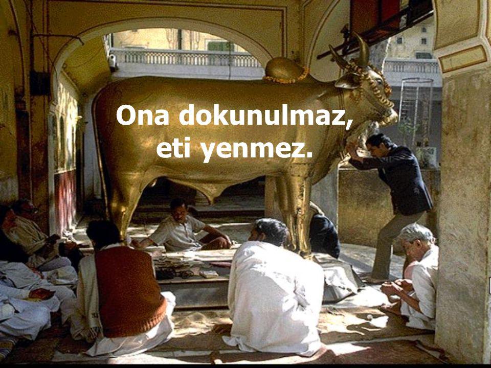 inek Hinduizm'de inek kutsaldır.