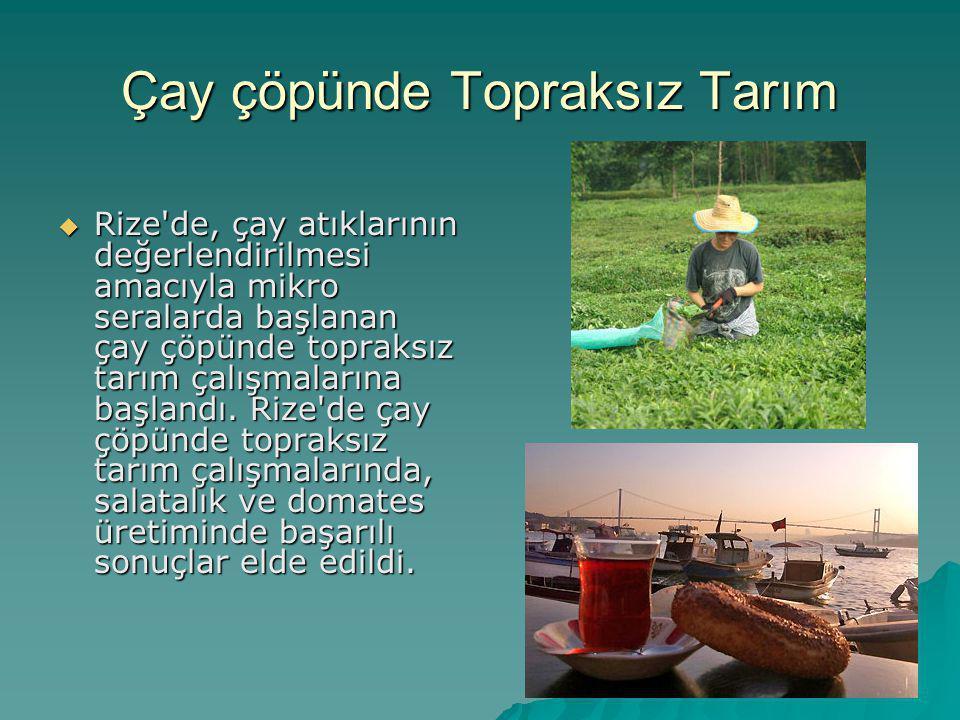 Çay çöpünde Topraksız Tarım  Rize'de, çay atıklarının değerlendirilmesi amacıyla mikro seralarda başlanan çay çöpünde topraksız tarım çalışmalarına b