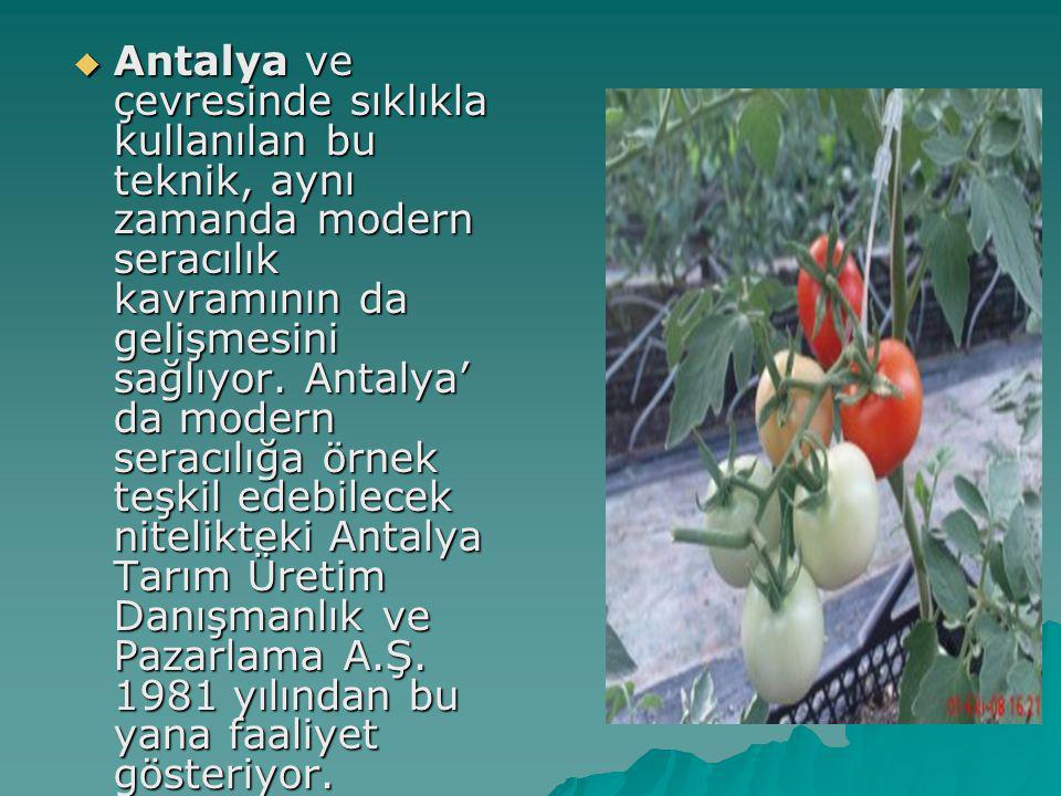  Antalya ve çevresinde sıklıkla kullanılan bu teknik, aynı zamanda modern seracılık kavramının da gelişmesini sağlıyor. Antalya' da modern seracılığa