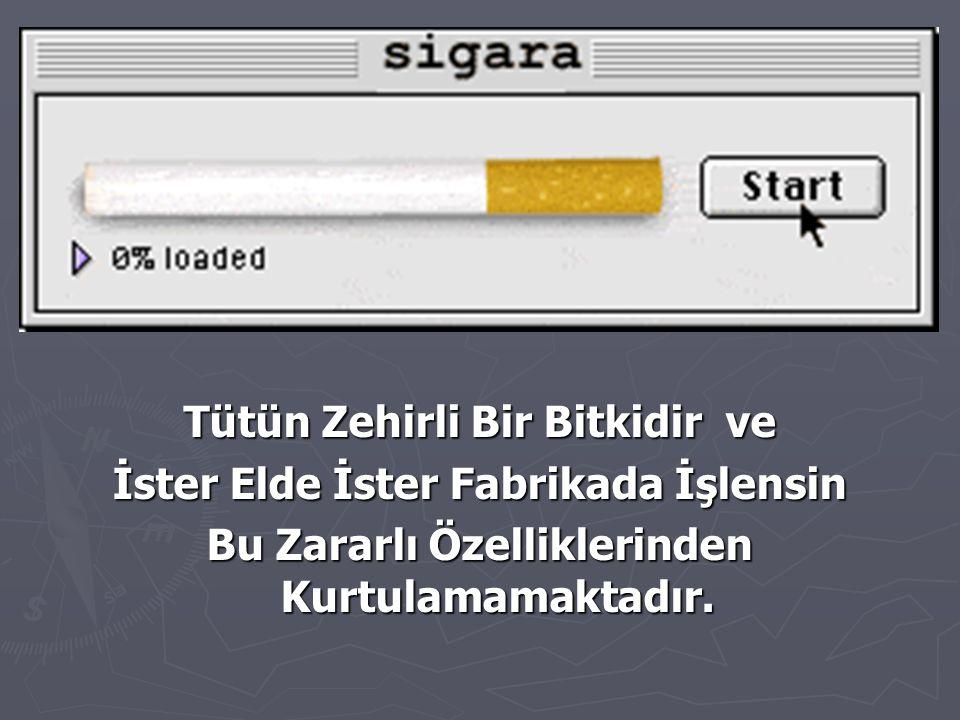 Sigara İçtiği İçin Ölen Her 9 Kişi İçmediği Halde Dumanını Soluyan 1 Kişinin de Ölümüne Neden Olmaktadır.