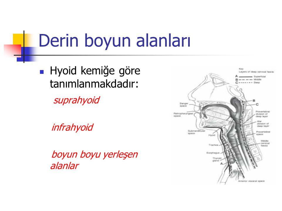 Derin boyun alanları Hyoid kemiğe göre tanımlanmakdadır: suprahyoid infrahyoid boyun boyu yerleşen alanlar
