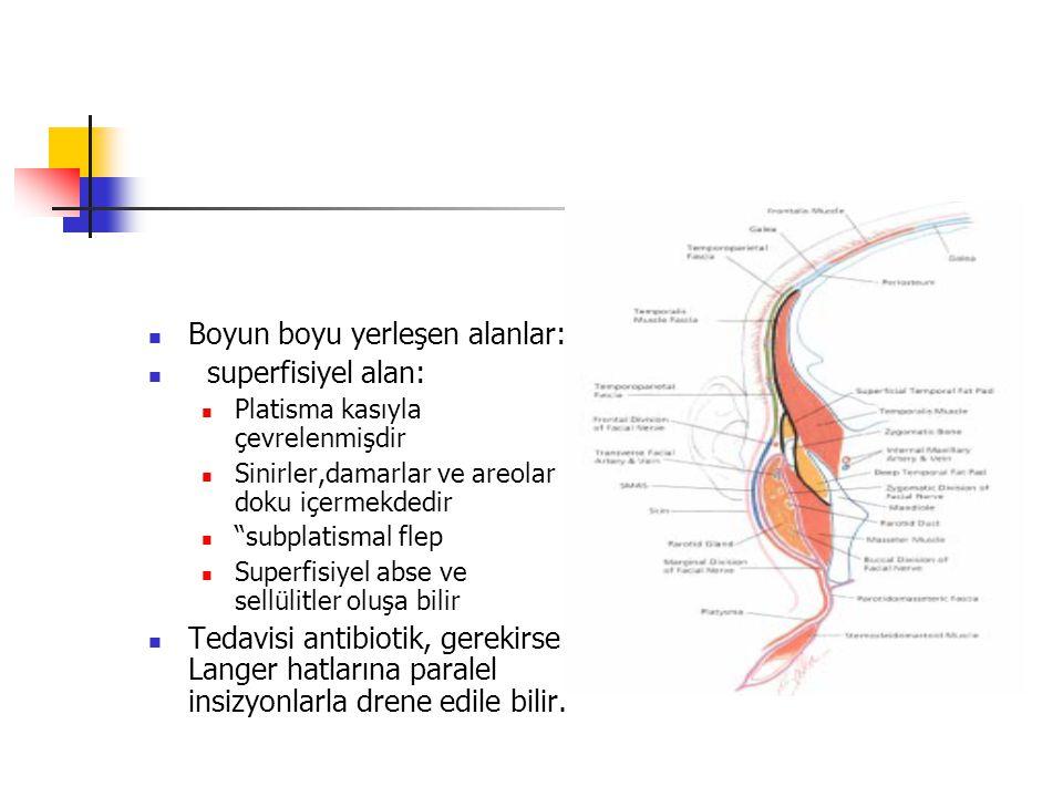 Boyun boyu yerleşen alanlar: superfisiyel alan: Platisma kasıyla çevrelenmişdir Sinirler,damarlar ve areolar doku içermekdedir subplatismal flep Superfisiyel abse ve sellülitler oluşa bilir Tedavisi antibiotik, gerekirse Langer hatlarına paralel insizyonlarla drene edile bilir.