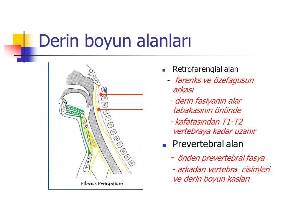 Derin boyun alanları Retrofarengial alan - farenks ve özefagusun arkası - derin fasiyanın alar tabakasının önünde - kafatasından T1-T2 vertebraya kadar uzanır Prevertebral alan - önden prevertebral fasya - arkadan vertebra cisimleri ve derin boyun kasları