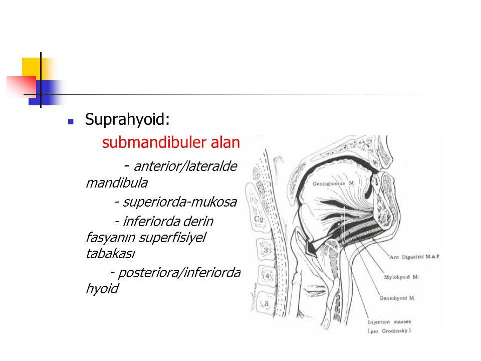 Suprahyoid: submandibuler alan - anterior/lateralde mandibula - superiorda-mukosa - inferiorda derin fasyanın superfisiyel tabakası - posteriora/inferiorda hyoid