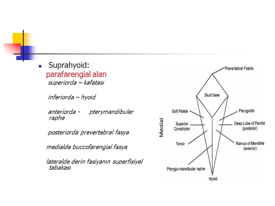 Suprahyoid: parafarengial alan superiorda – kafatası inferiorda – hyoid anteriorda - pterymandibuler raphe posteriorda prevertebral fasya medialde buccofarengial fasya lateralde derin fasiyanın superfisiyel tabakası