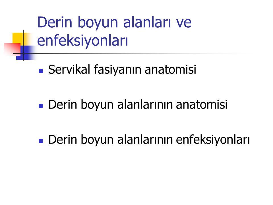 Derin boyun alanları ve enfeksiyonları Servikal fasiyanın anatomisi Derin boyun alanlarının anatomisi Derin boyun alanlarının enfeksiyonları