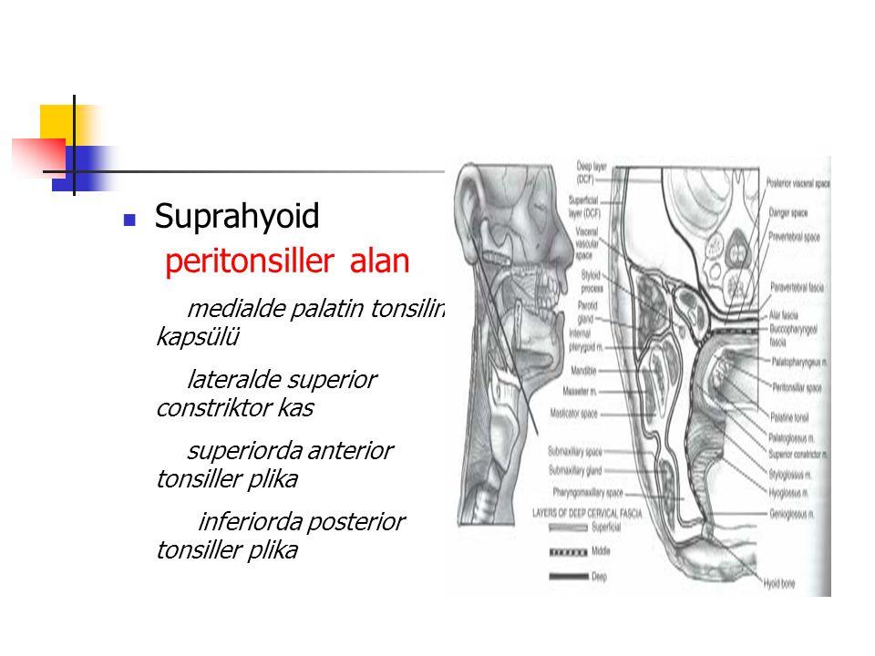 Suprahyoid peritonsiller alan medialde palatin tonsilin kapsülü lateralde superior constriktor kas superiorda anterior tonsiller plika inferiorda posterior tonsiller plika