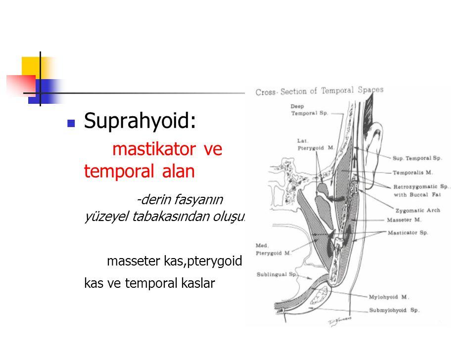 Suprahyoid: mastikator ve temporal alan -derin fasyanın yüzeyel tabakasından oluşur masseter kas,pterygoid kas ve temporal kaslar