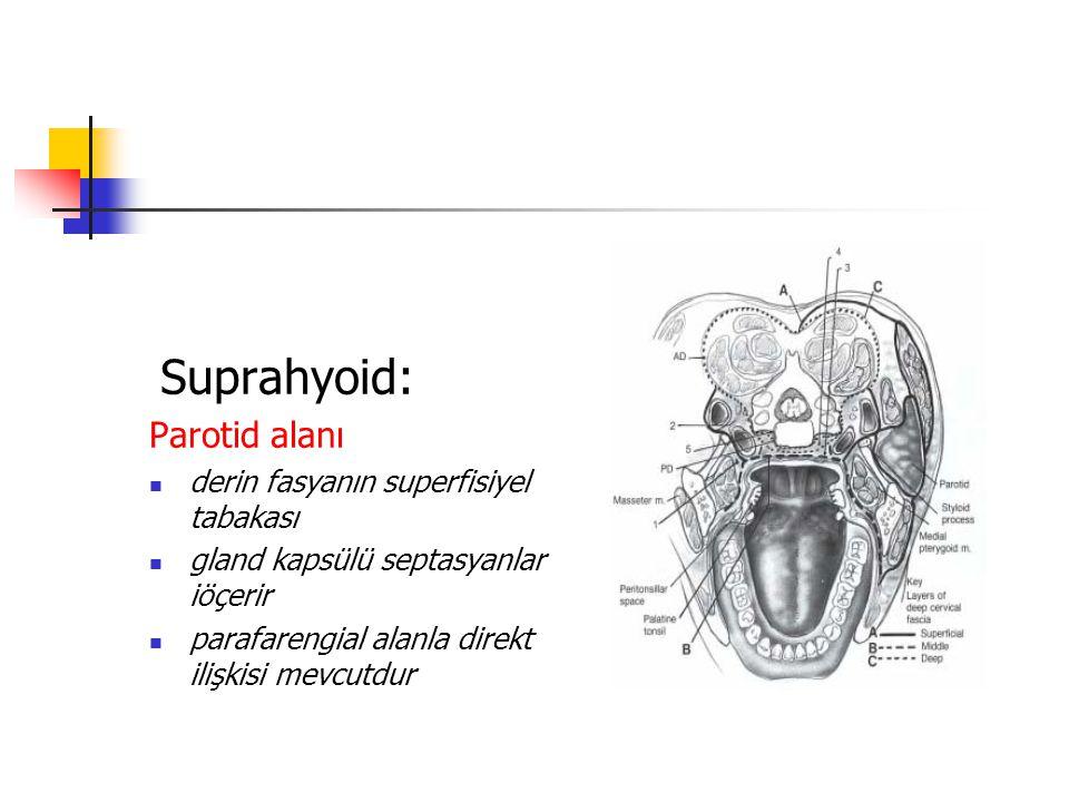 Suprahyoid: Parotid alanı derin fasyanın superfisiyel tabakası gland kapsülü septasyanlar iöçerir parafarengial alanla direkt ilişkisi mevcutdur