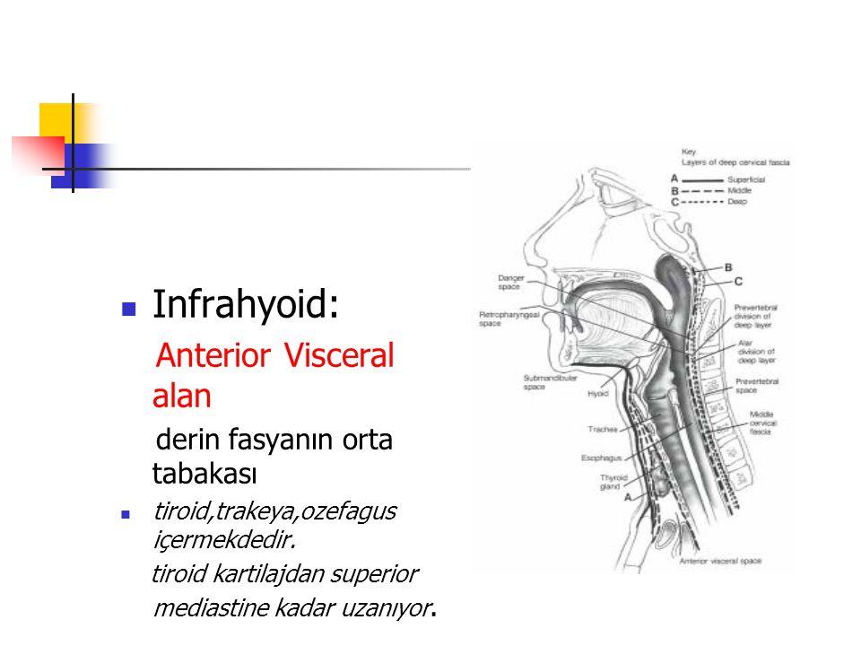 Infrahyoid: Anterior Visceral alan derin fasyanın orta tabakası tiroid,trakeya,ozefagus içermekdedir.