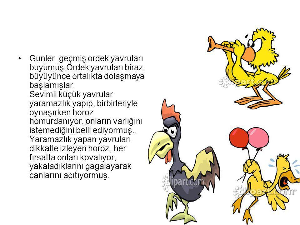 Okulun yararlı olduğunu anlayan kuşlar ve sincaplar da yavrularını Ördek Okulu na göndermeye başlamışlar.