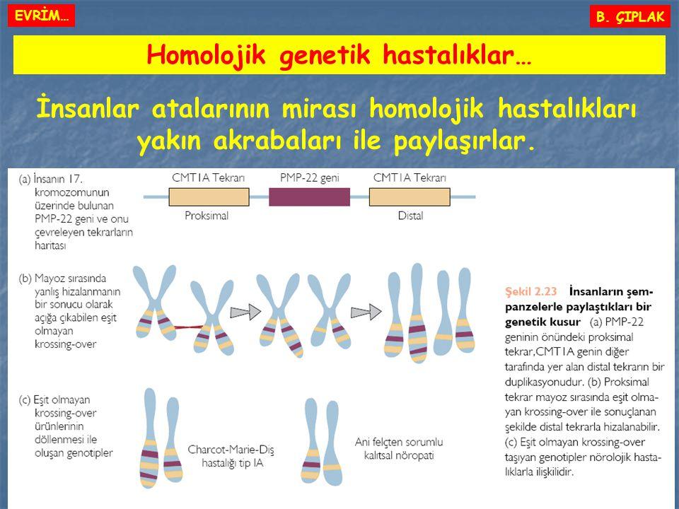 B. ÇIPLAK Homolojik genetik hastalıklar… İnsanlar atalarının mirası homolojik hastalıkları yakın akrabaları ile paylaşırlar. EVRİM…
