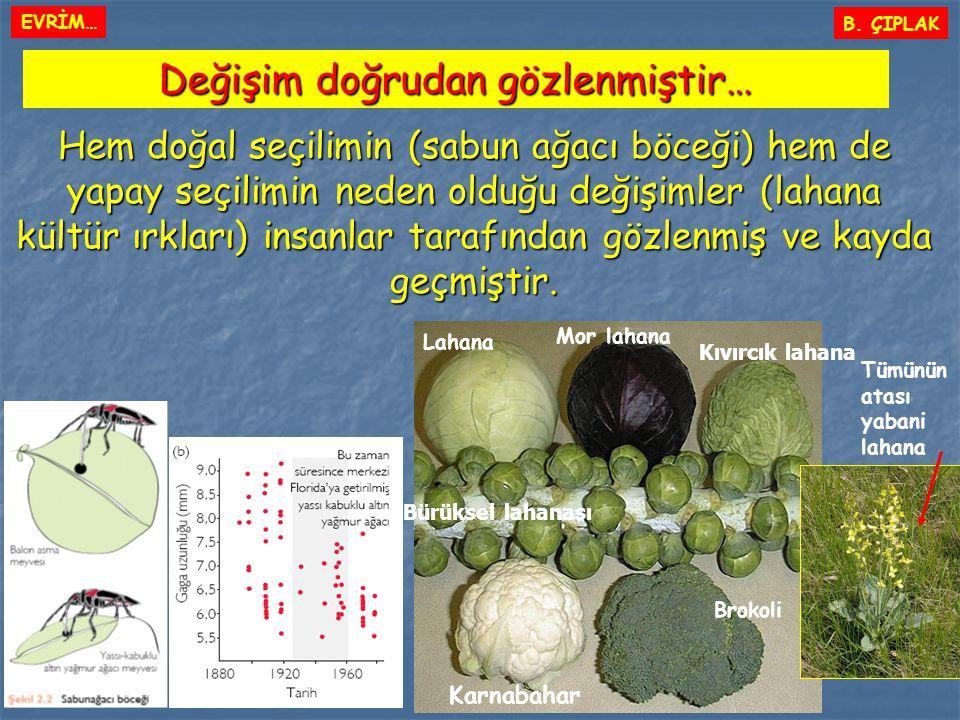 B. ÇIPLAK Değişim doğrudan gözlenmiştir… Hem doğal seçilimin (sabun ağacı böceği) hem de yapay seçilimin neden olduğu değişimler (lahana kültür ırklar
