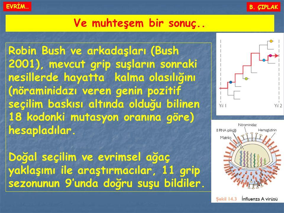 Ve muhteşem bir sonuç.. Robin Bush ve arkadaşları (Bush 2001), mevcut grip suşların sonraki nesillerde hayatta kalma olasılığını (nöraminidazı veren g