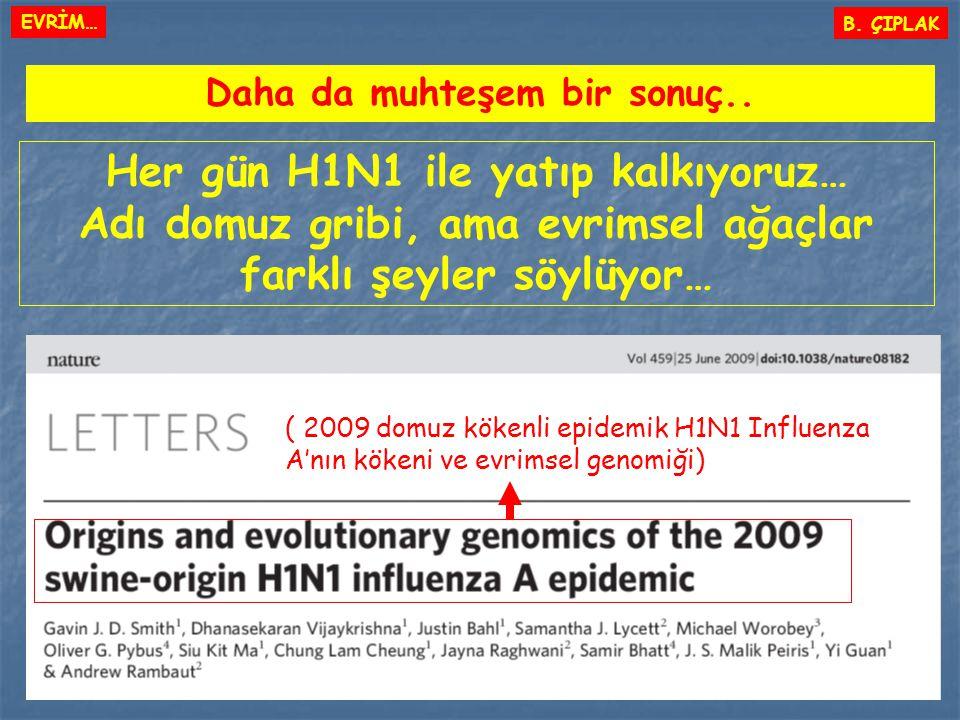 Daha da muhteşem bir sonuç.. Her gün H1N1 ile yatıp kalkıyoruz… Adı domuz gribi, ama evrimsel ağaçlar farklı şeyler söylüyor… ( 2009 domuz kökenli epi
