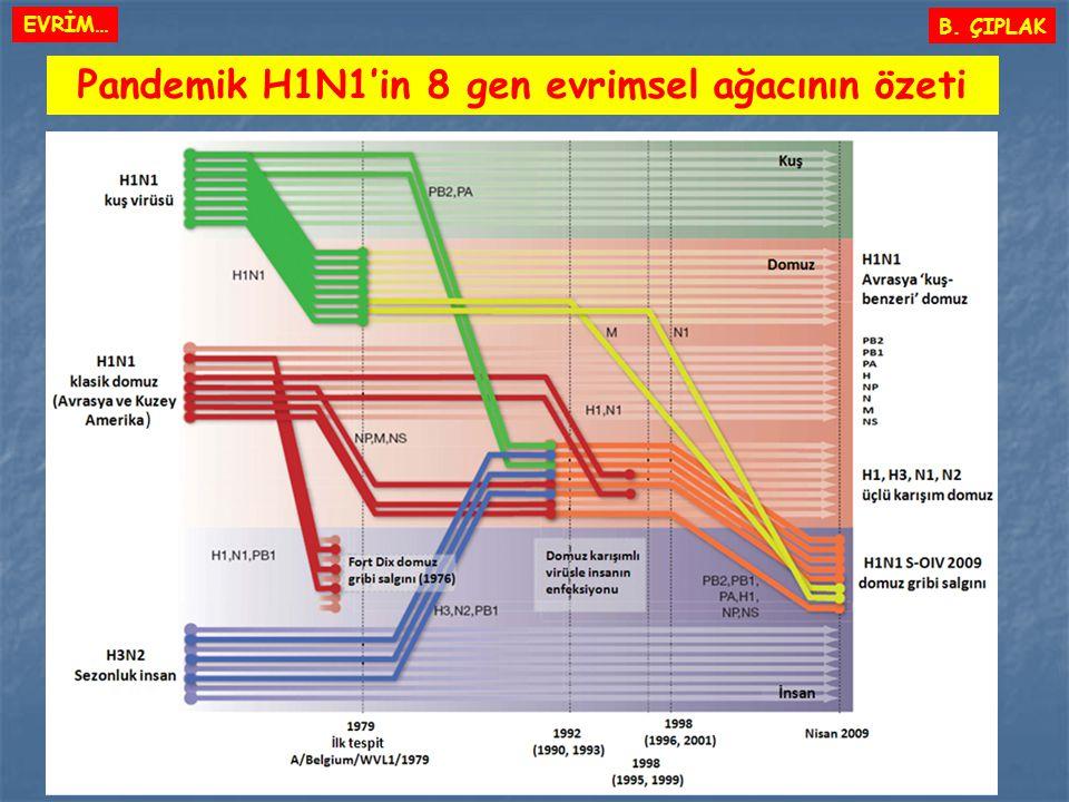 Pandemik H1N1'in 8 gen evrimsel ağacının özeti B. ÇIPLAK EVRİM…