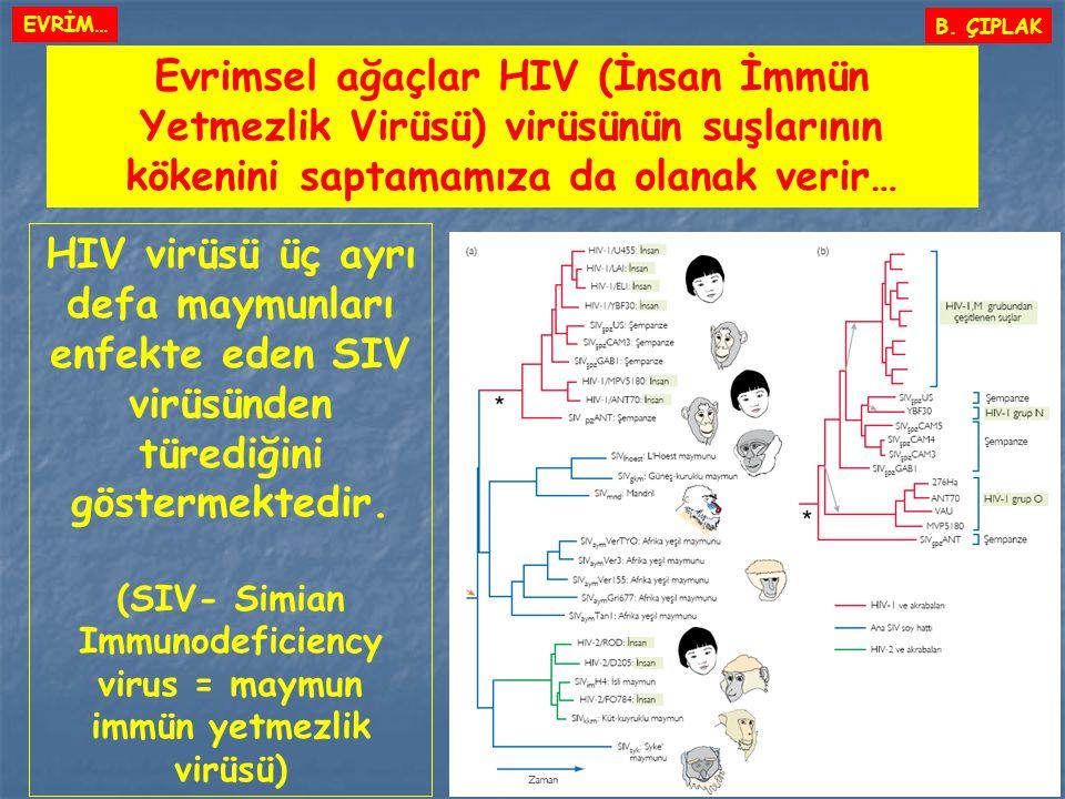 Evrimsel ağaçlar HIV (İnsan İmmün Yetmezlik Virüsü) virüsünün suşlarının kökenini saptamamıza da olanak verir… B. ÇIPLAK EVRİM… HIV virüsü üç ayrı def