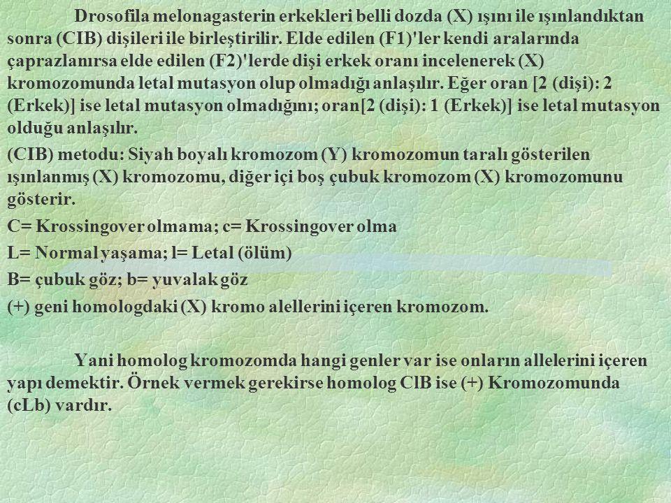 Drosofila melonagasterin erkekleri belli dozda (X) ışını ile ışınlandıktan sonra (CIB) dişileri ile birleştirilir. Elde edilen (F1)'ler kendi araların