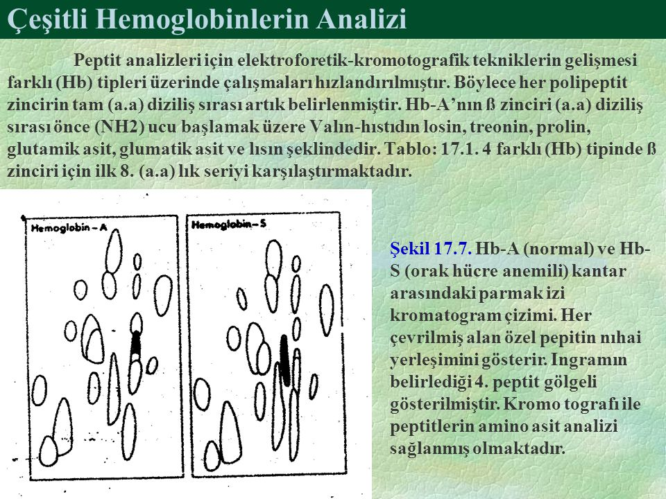 Çeşitli Hemoglobinlerin Analizi Peptit analizleri için elektroforetik-kromotografik tekniklerin gelişmesi farklı (Hb) tipleri üzerinde çalışmaları hız