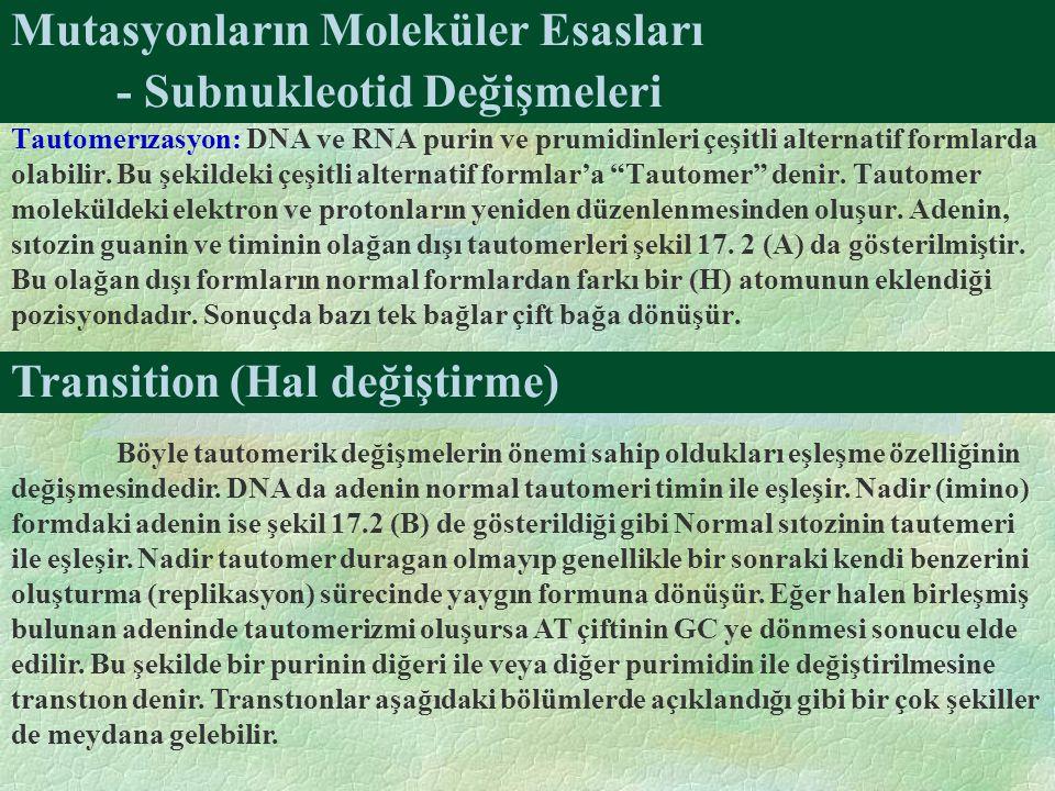 Mutasyonların Moleküler Esasları Tautomerızasyon: DNA ve RNA purin ve prumidinleri çeşitli alternatif formlarda olabilir. Bu şekildeki çeşitli alterna