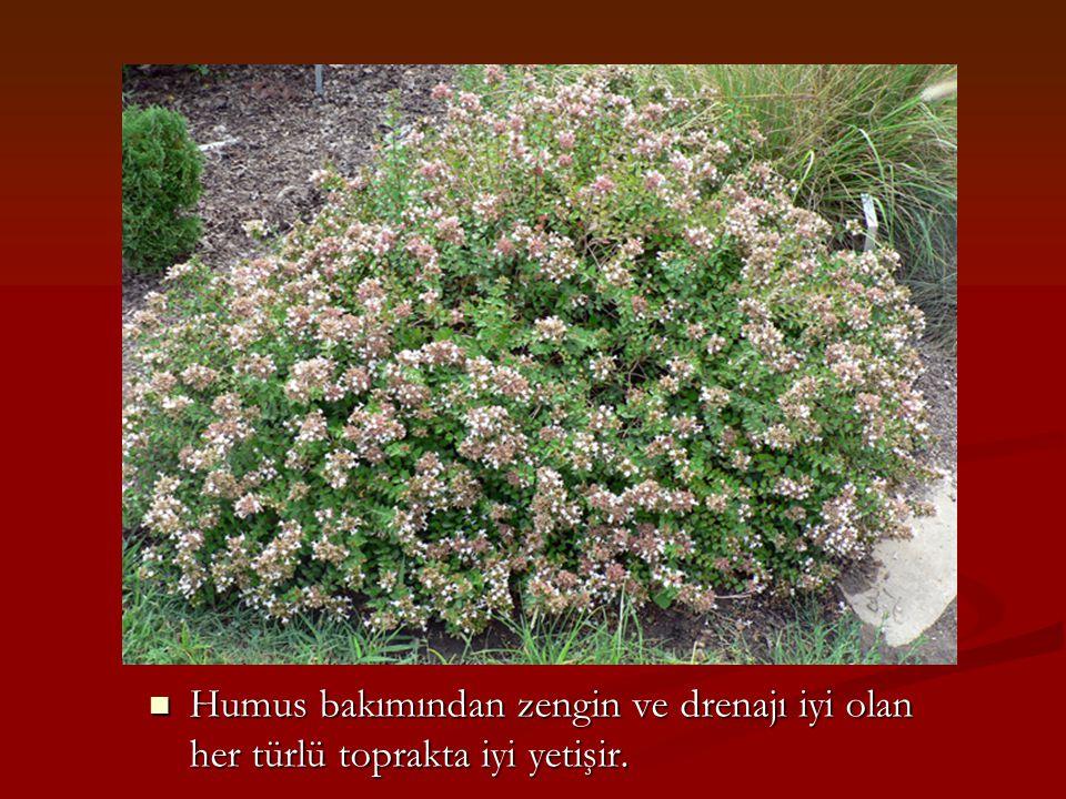 Humus bakımından zengin ve drenajı iyi olan her türlü toprakta iyi yetişir.