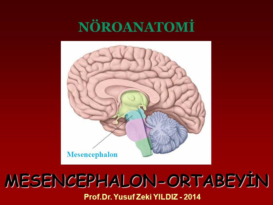 NÖROANATOMİ Prof.Dr. Yusuf Zeki YILDIZ - 2014 MESENCEPHALON-ORTABEYİN Mesencephalon