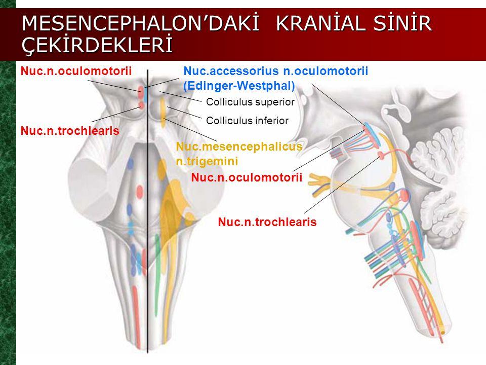 MESENCEPHALON'DAKİ KRANİAL SİNİR ÇEKİRDEKLERİ Colliculus superior Nuc.n.oculomotoriiNuc.accessorius n.oculomotorii (Edinger-Westphal) Colliculus infer