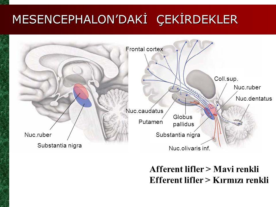 MESENCEPHALON'DAKİ ÇEKİRDEKLER Nuc.ruber Substantia nigra Frontal cortex Nuc.dentatus Coll.sup. Putamen Nuc.caudatus Nuc.olivaris inf. Globus pallidus