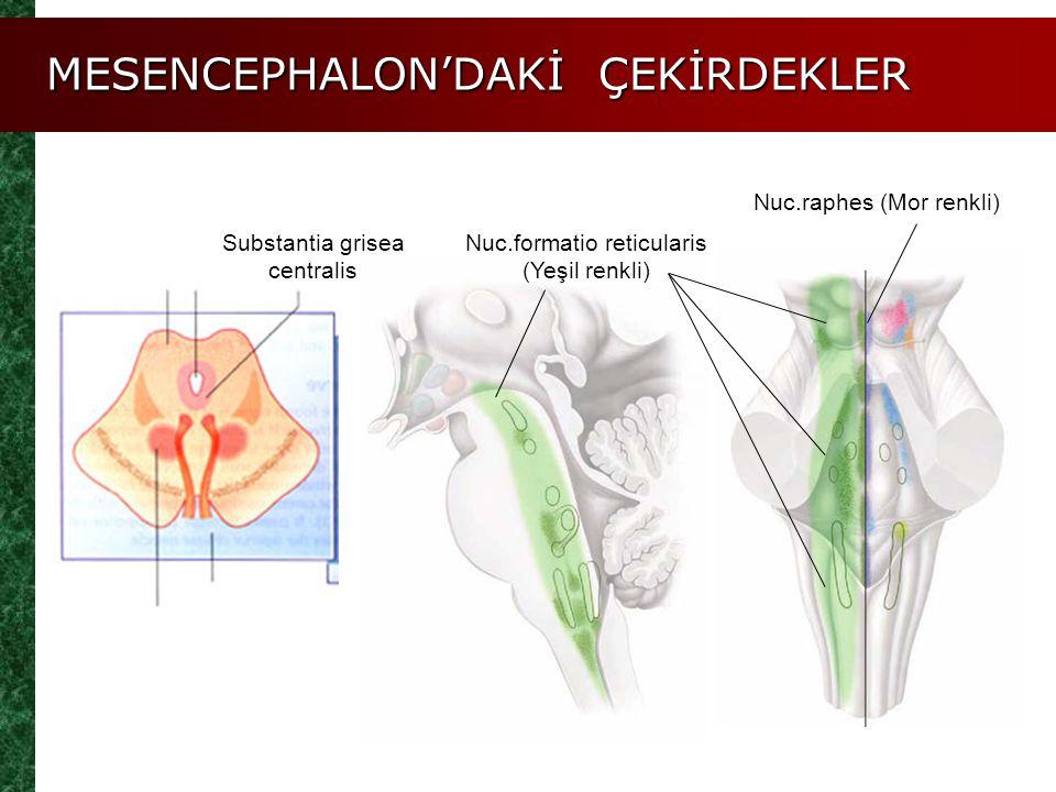 MESENCEPHALON'DAKİ ÇEKİRDEKLER Substantia grisea centralis Nuc.formatio reticularis (Yeşil renkli) Nuc.raphes (Mor renkli)